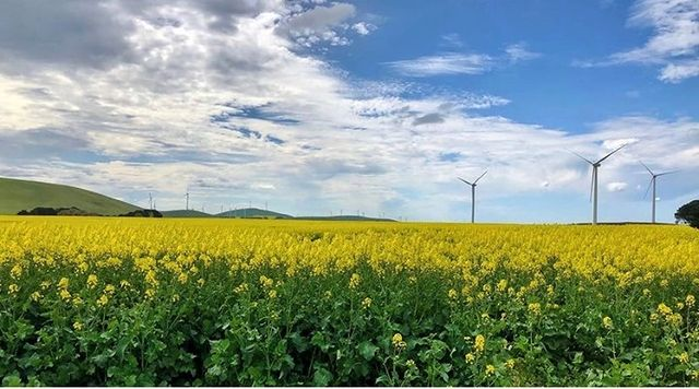 Look at the beauty of this #canola field and this #windturbines 😍… #betd21 #Energiewende #JointheDialogue #renewa…