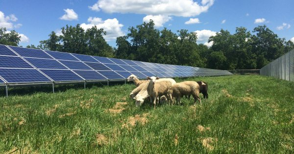 @greensofa_betd: News from #Austria! A former gravel dump of Vienna now produces over 12 GWh of #cleanenergy. The #PV project now accomodates #sheep as eco-friendly lawnmowers. The panels serve as shelter for the animals when it rains or shines.@eu_mayor #betd21 #solar