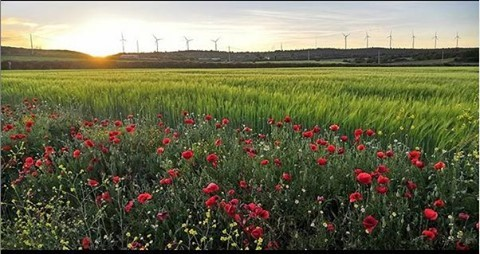 Have a great #weekend and enjoy the view on these wonderful poppy fields! And on these beautiful #wind #turbines of cour…