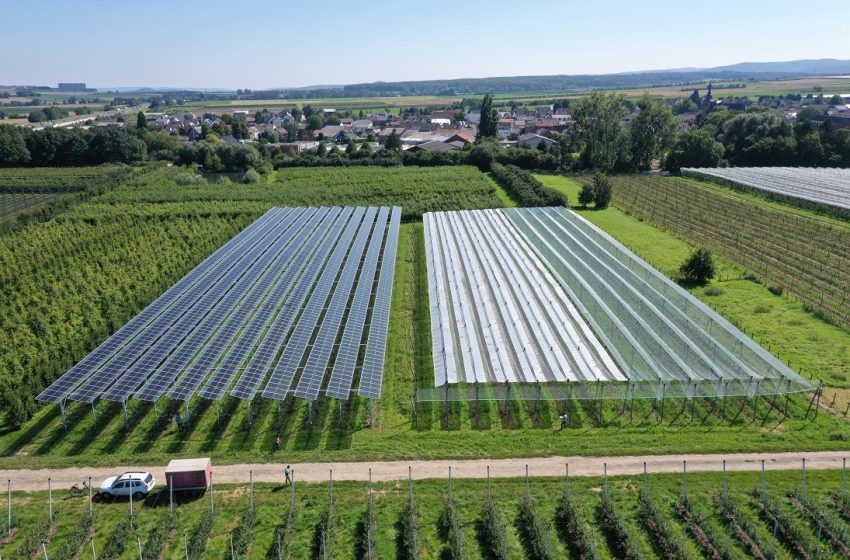 @pvmagazine: Agrivoltaics to protect crops from heavy rainfall: BayWa r.e. and the Fraunhofer Institute for Solar Energy Systems ISE have built a 258 kW agrivoltaic system that hosts apple cultivation under four different crop protection…  #solarenergy #solarpv #solar